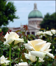 The All-American Rose Garden